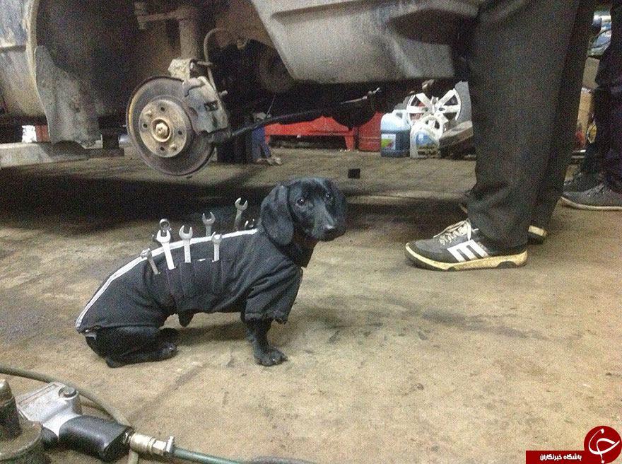 سگی که دستیار مکانیک شد+تصاویر
