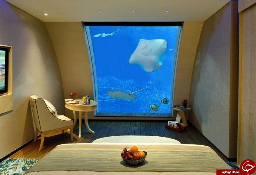 تجربه خوابیدن زیر دریا بدون ماسک اکسیژن + عکس