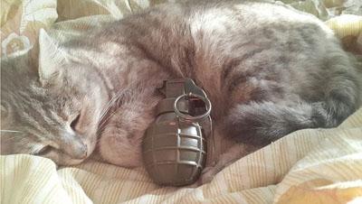 جذب تروریست داعش با استفاده از گربه انتحاری+ تصاویر