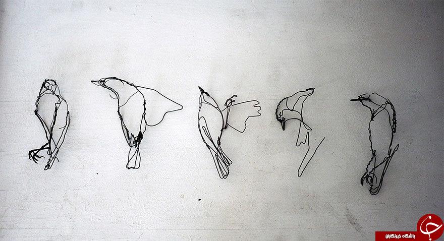 حیواناتی از جنس سیم + عکس