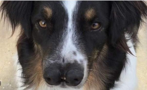 موزیسین معروف سگ عجیب الخلقه را از مرگ نجات داد+عکس