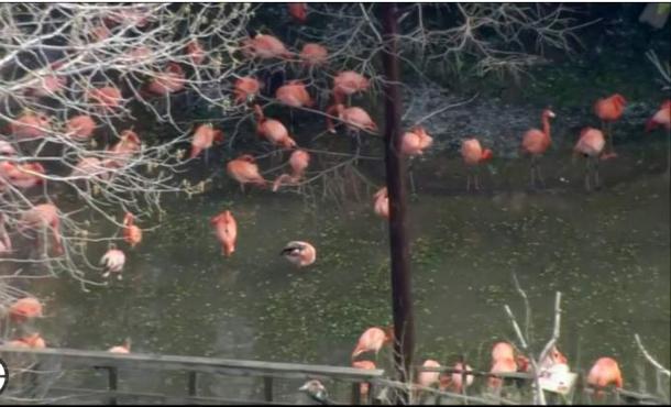 تگرگ بیسابقه پرندگان مینیاتوری و کمیاب را کشت+تصاویر
