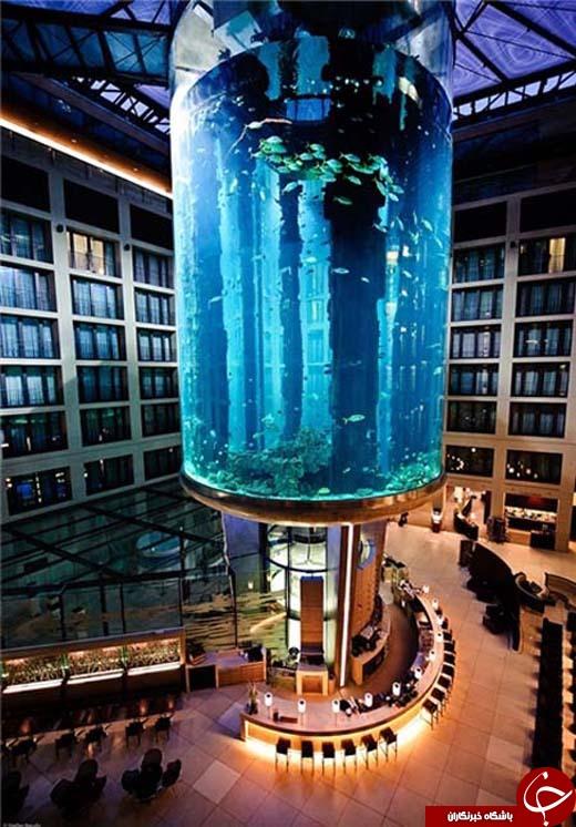 12//ماهی ها هم سوار آسانسور می شوند