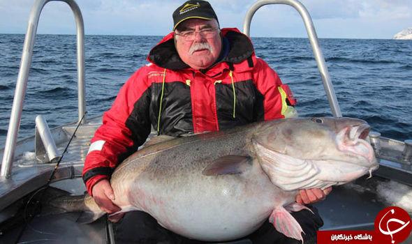 بزرگترین ماهیهای تاریخ شکار شدند+تصاویر