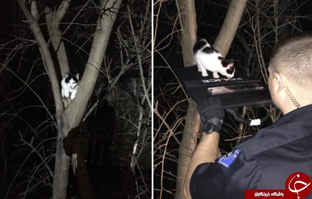 شوکر پلیس گربۀ فضول نجات داد+عکس