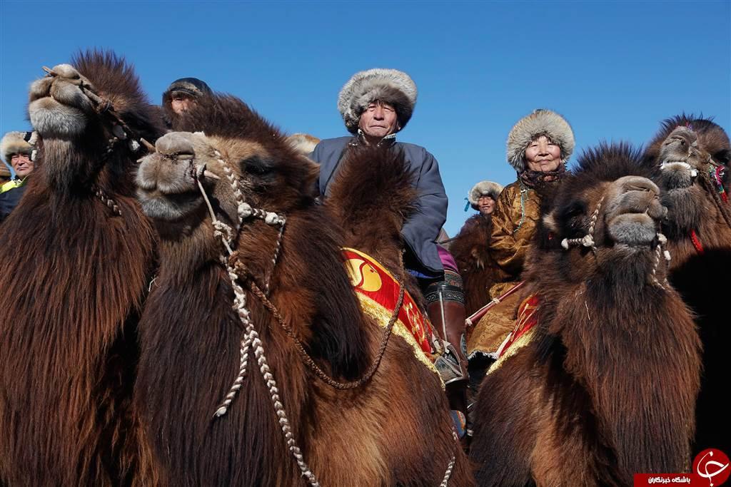 بیسابقهترین مسابقه حیوانات پشمالو + تصاویر