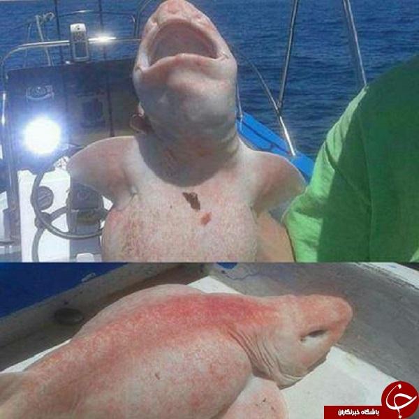 صید کوسه ماهی عجیب در مکزیک +عکس