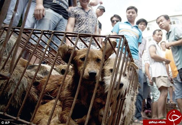 چینی ها برای خوردن این حیوانات سر و دست می شکنند+تصاویر