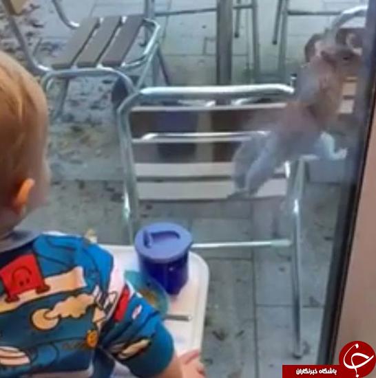 تلاش برای گرفتن غذای بچه