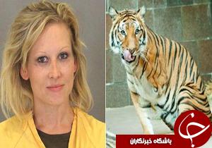 زنی که توسط ببر گاز گرفته شده بود، 250 دلار جریمه شد+عکس