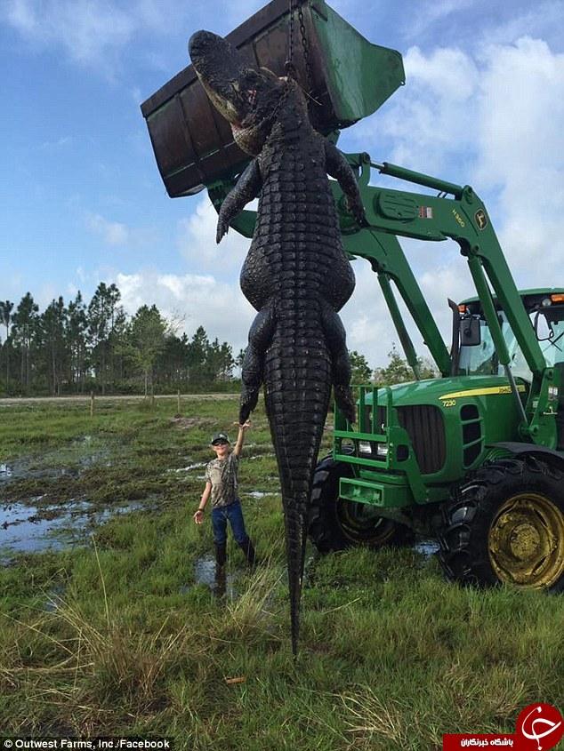 شکار تمساح 5 متری توسط یک مزرعه دار+تصاویر
