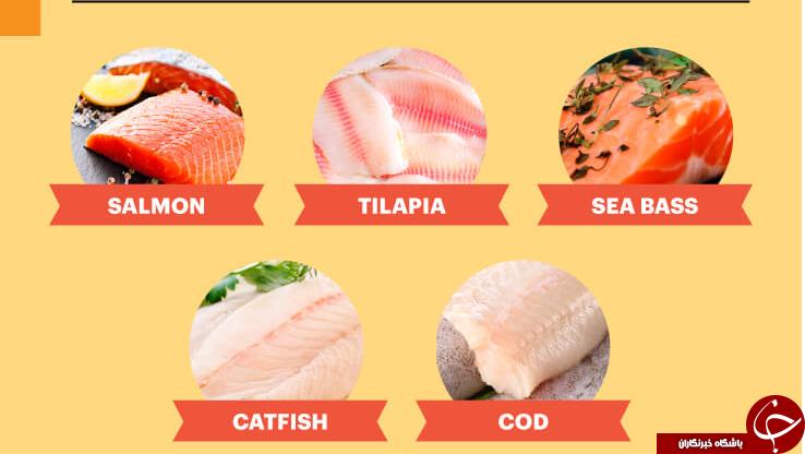 این ماهی های وارداتی غیرمجاز و کشنده را نخرید+ اسامی