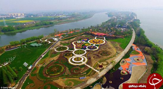 پارک بی نظیر گل ها در چین+ تصاویر