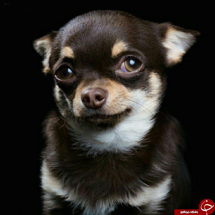 ژست جالب ودیدنی حیوانات+تصاویر