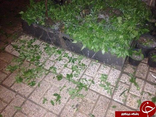 تگرگی که نیمه شب به سراغ مشهدیها آمد + تصاویر