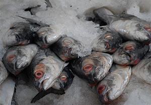 سبزوار مقام نخست توليد ماهي در خراسان رضوي