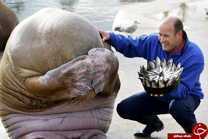 حیواناتی با جشن تولد مهیج +تصاویر///در حال کار