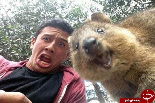 سلفی عجیب با حیوانات +تصاویر