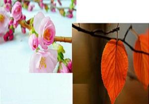 حکایت ضربالمثل «از باد بهار بهره بردار، از باد پاییز خودت نگهدار» چیست؟