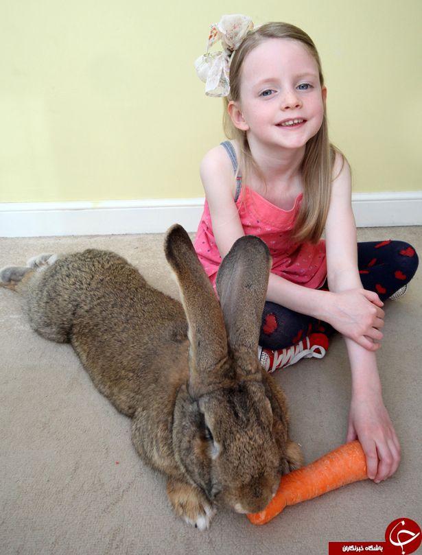 بزرگترین خرگوش جهان که فکر میکند یک سگ است+تصویر