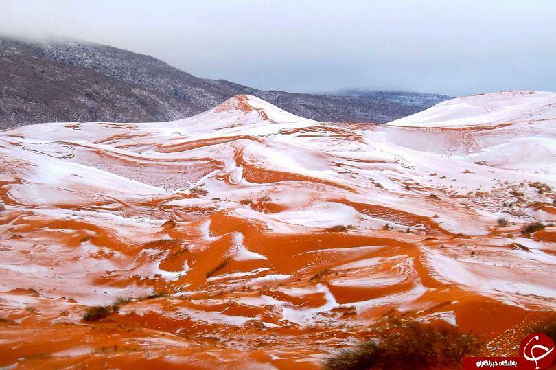 تصاویری حیرت انگیز از بارش برف در صحرای بزرگ آفریقا پس از 37 سال!+ عکس