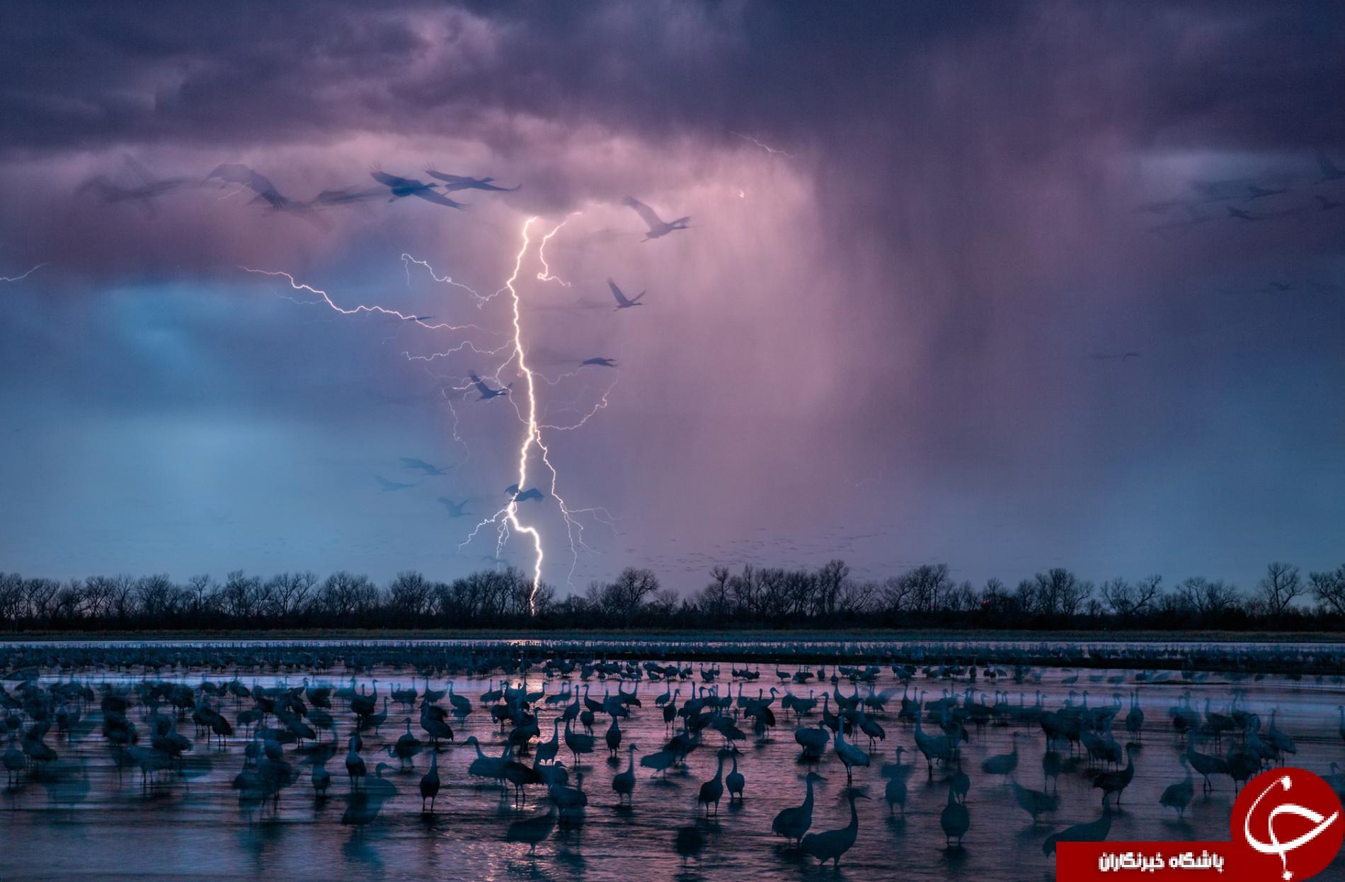 بهترین عکس های سال 2016 از لنز نشنال جئوگرافیک