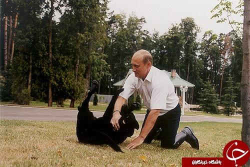 ویژگیهایی استثنایی سگ سیاه پوتین