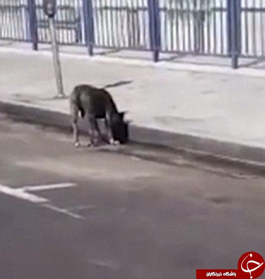 کشتن سگ جلوی صاحبش +تصاویر