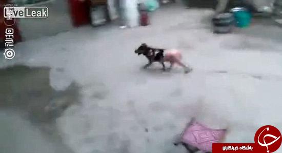 پختن سگ در داخل دیگ +تصاویر