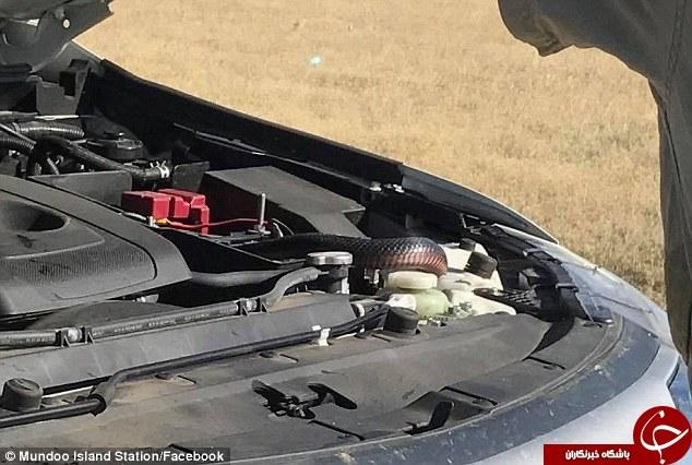 مار داخل ماشین زن جوان را شوکه کرد + تصاویر