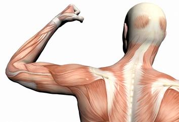 اندازه دور بازوهای تان به شما می گوید چقدر عمر می کنید