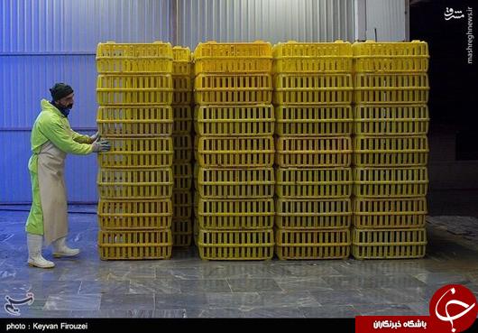 عکس/ در کشتارگاه مرغ چه میگذرد؟