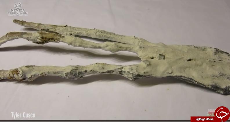 کشف دست عجیبی که موجب حیرت محققان شده است + تصاویر
