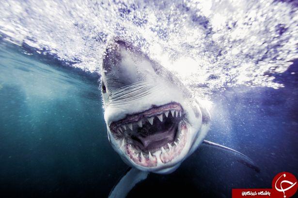 عکاسی که یکی از خطرناک ترین تصاویر جهان را ثبت کرد + تصاویر