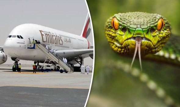 Image result for مار در هواپیمای امارات