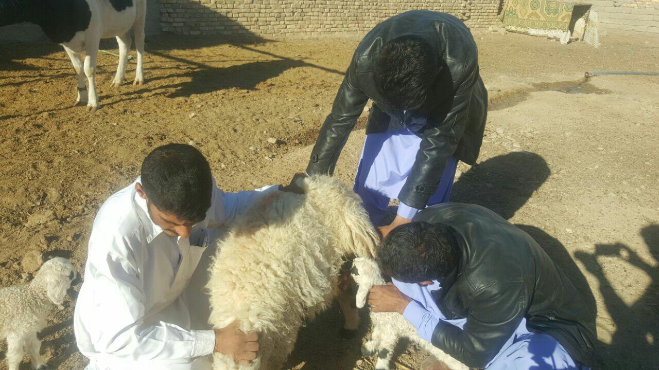 عجیب الخلقه حیوانات عجیب دنیا حیوان کمیاب اخبار هیرمند اخبار سیستان و بلوچستان اخبار زاهدان