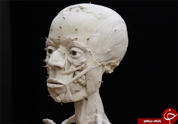 بازسازی چهره مردی که ۹۵۰۰ سال قبل زندگی میکرد+ تصاویر