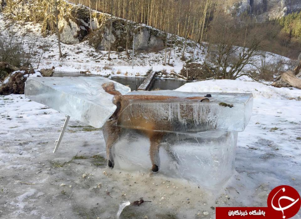 شکارچی که خود نیز شکار زمستان سرد شد+ تصاویر
