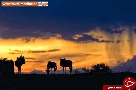 عکس/ تماشای زیباییهای آفریقا زیبایی های قاره سیاه با تکنیک سایه نما