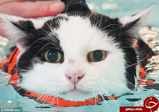 گربه عاشق شنا +تصاویر