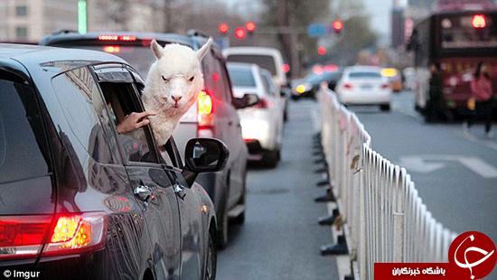 اتفاقات عجیبی که در خیابان افتادند به روایت تصویر