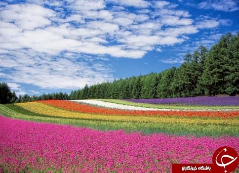 تصاویر آرامشدهنده از طبیعت