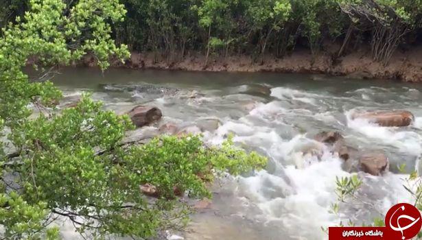 زیرکی تمساح 4 متری موجب وحشت ماهیگیر شد+ تصاویر