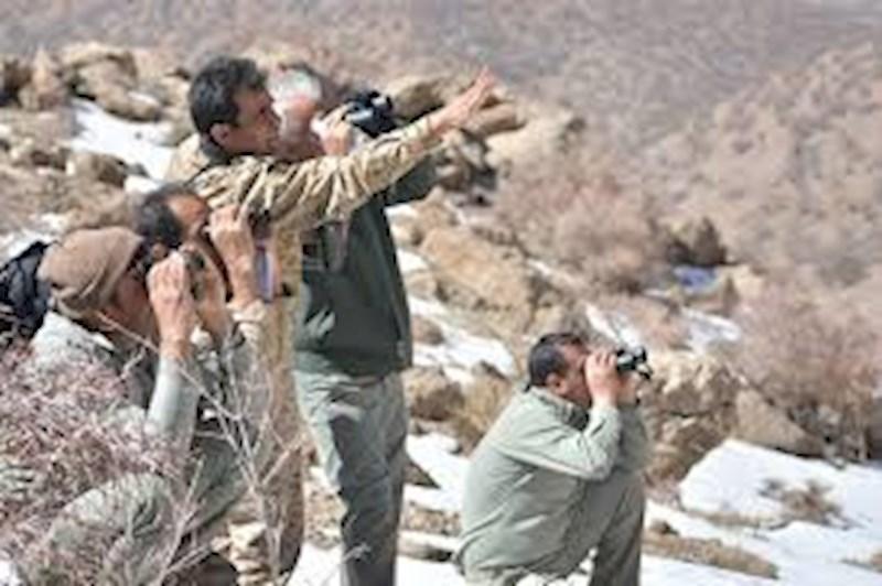 شکارچیان متخلف، شکار محیط بانان ملایری شدند