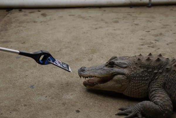 آزمایش دوام آیفون7 در برابر قدرت آرواره های تمساح