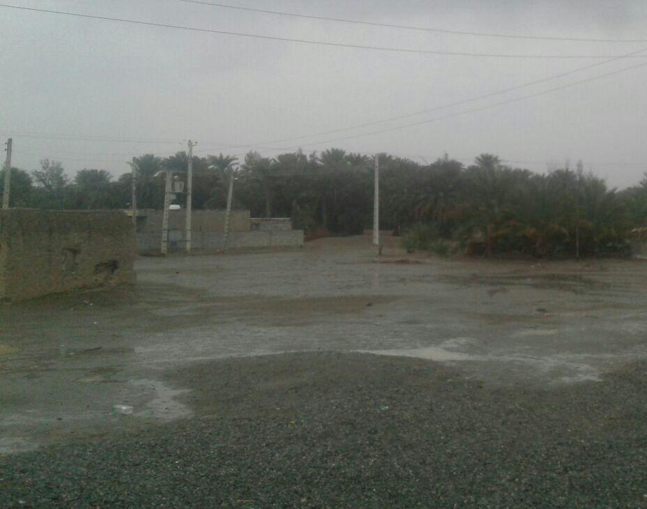 باران هوای شهرهای کرمان را معطر کرد