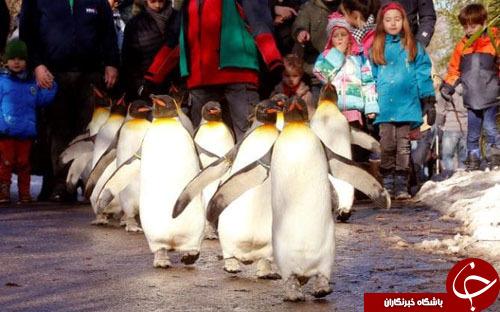 از رژه پنگوئنها در زوریخ تا مکالمه تلفنی ترامپ و پوتین/////////////////