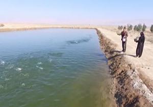 پرورش ماهی در استخر خاکی + فیلم