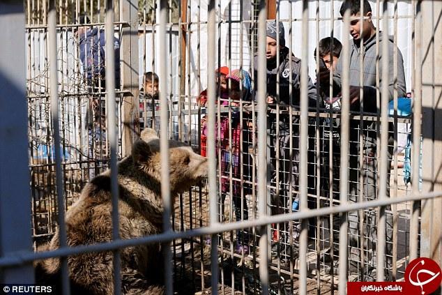 بلایی که داعش بر سر باغ وحش موصل آورد + تصاویر