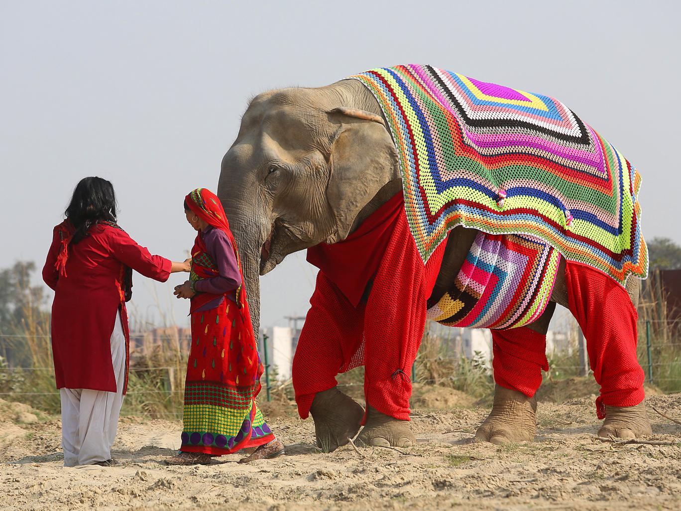 اقدام جالب زنان هندی برای حفاظت از فیلها در برابر سرما+ تصاویر